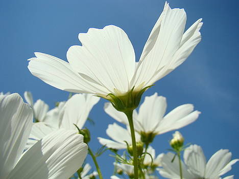 Baslee Troutman - DAISIES FLORAL Art Prints Canvas Daisy Flowers Blue Skies