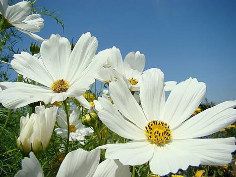 Baslee Troutman - DAISIES Flowers Art Prints White Daisy Flower Gardens