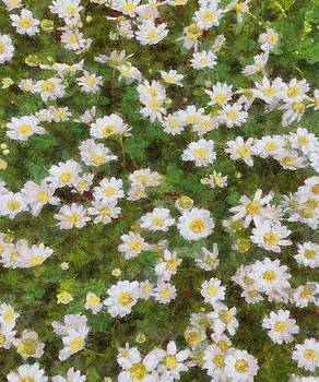 Daisies In Spring by Tracey Harrington-Simpson