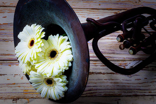 Daisies In Tuba by Garry Gay