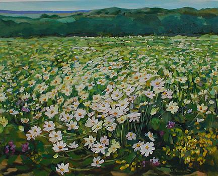 Daisies  by Liliane Fournier