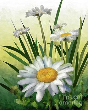 Lois Bryan - Daisies