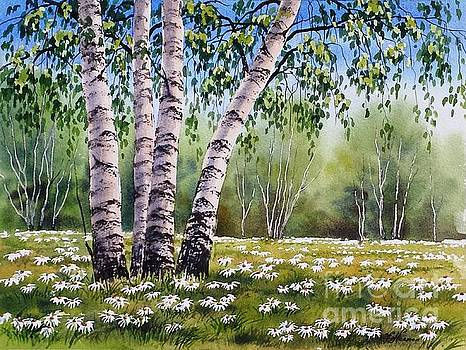 Daisies Season by Varvara Harmon