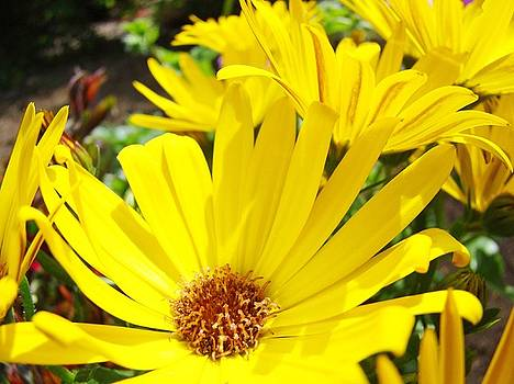 Baslee Troutman - Daisies Summer Garden art print Yellow Daisy Baslee