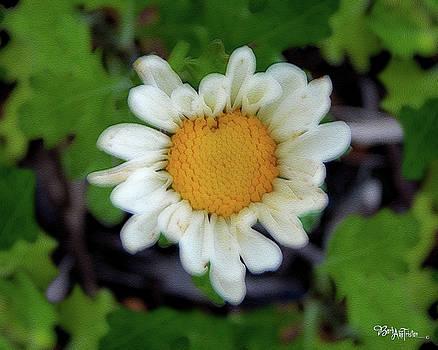 Daisy # 4203 by Barbara Tristan