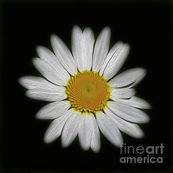 Daisy 1 by Candydash Images