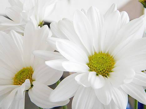 Daisy by Alyona Firth