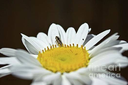 Ms Judi - Daisy and Leafhopper