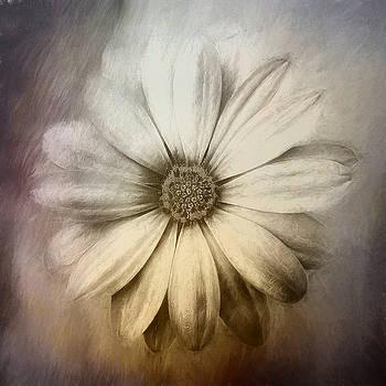 Daisy by Cindy Grundsten
