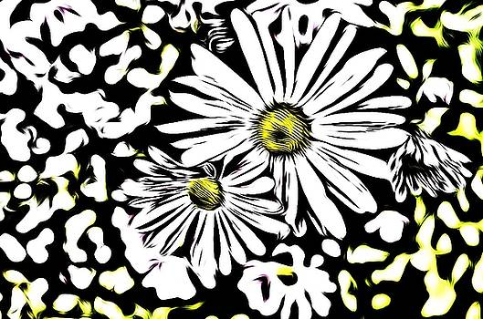 Daisy Crazy by Collette Rogers