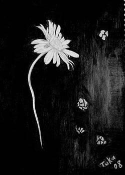 Daisy by Tuki Makhatchadze