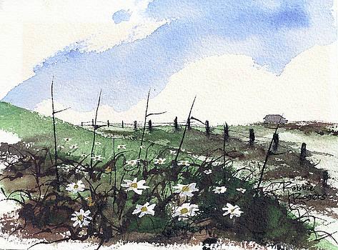 Daisy Field by Robbie L Rogers