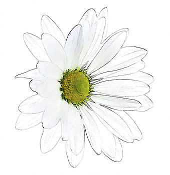 Daisy Flower by Beth Fox