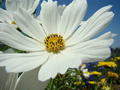Baslee Troutman - DAISY FLOWER Garden Artwork DAISIES Botanical Art Prints