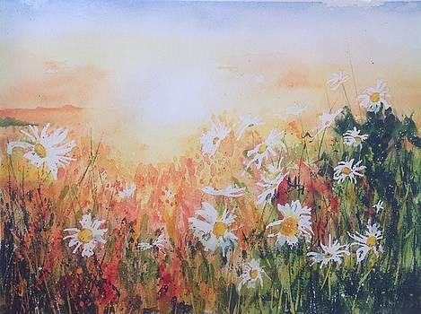 Daisy Haze by Sarah Guy-Levar