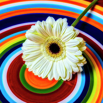 Daisy In Circles by Garry Gay