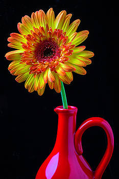 Daisy In Red Pitcher by Garry Gay