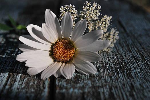 Daisy by Larysa  Luciw