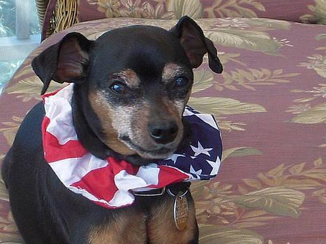 Daisy May 4th of July 2011 by Deborah Finley