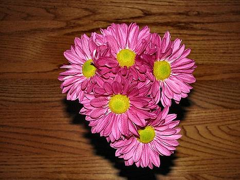 Daisy on Wood by Camera Candy