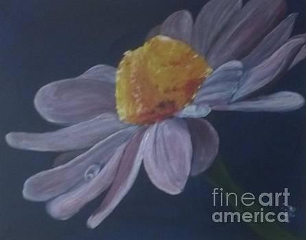 Daisy by Saundra Johnson