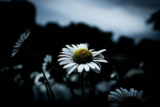 Daisy Storms by Johnathan Erickson