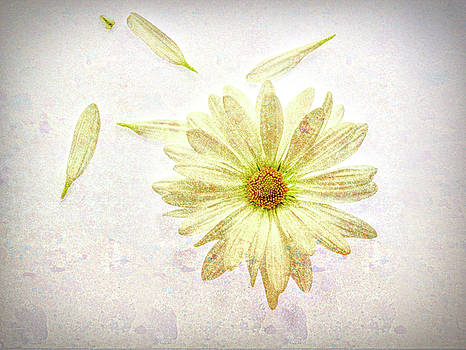 Daisy Textured by Beth Fox