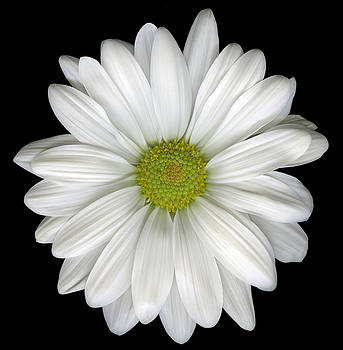 Marsha Tudor - Daisy White