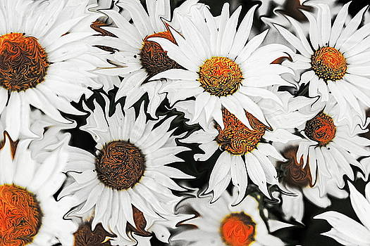 Daisy With a Twist by MaryAnn Janzen
