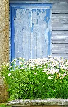 Daisy's on blue by Bruce Carpenter