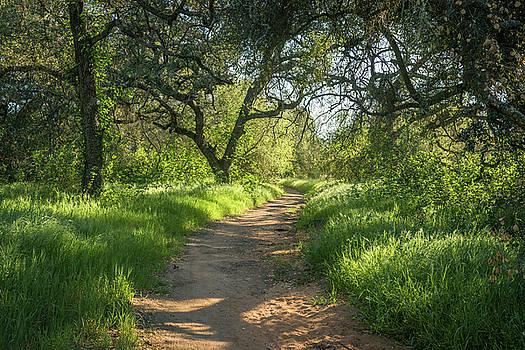 Daley Ranch - The Engelmann Oak Trail by Alexander Kunz