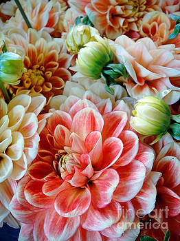 Dalias by Maureen Cavanaugh Berry