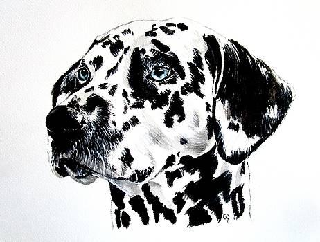 Dalmatian by Carol Blackhurst