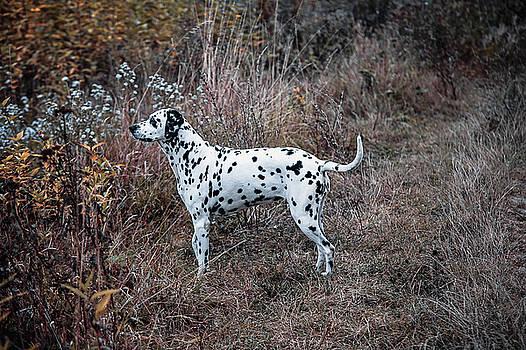 Jenny Rainbow - Dalmatian Dog in the Autumnal Grass