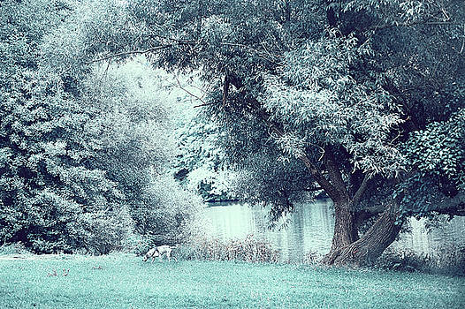 Jenny Rainbow - Dalmatian in Blue Woods