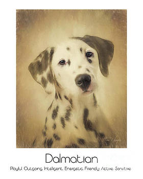 Dalmatian Poster by Tim Wemple