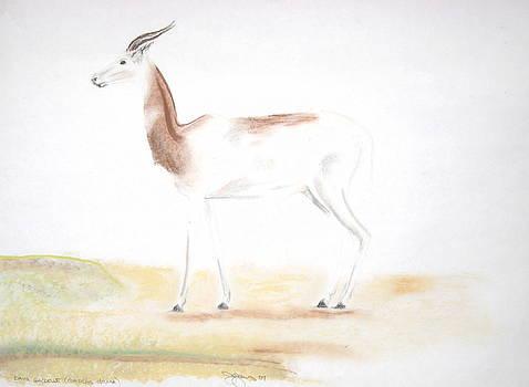Dama Gazelle by Darkest Artist