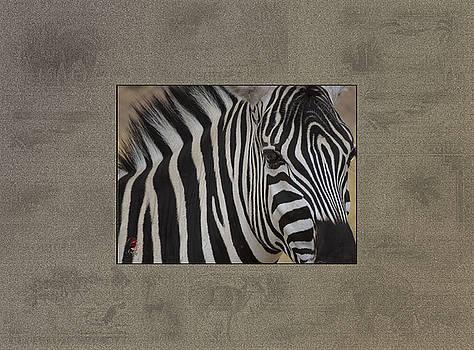 Damara Zebra by Patricia Whitaker