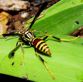 Damian's Wasp by Radical Reconstruction Fine Art Featuring Nancy Wood