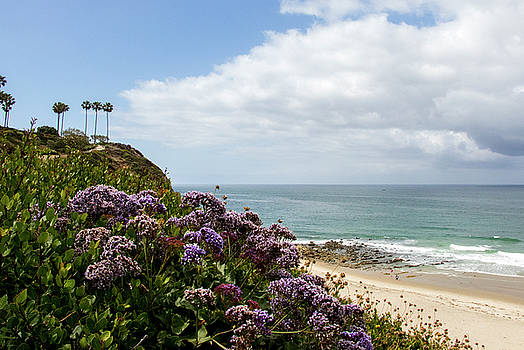 Dana Point by Jean Haynes