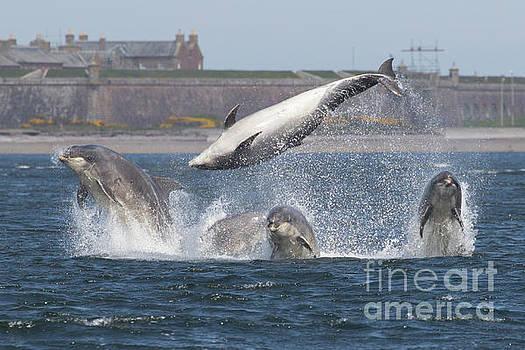 Dance of the Dolphins by Karen Van Der Zijden