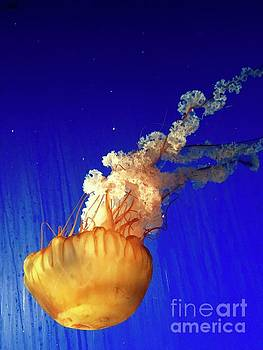 Dance of the Jelly by Beth Saffer