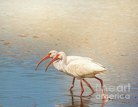 Dance Of The White Ibis by Robert Frederick