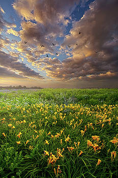 Dance On The West Wind by Phil Koch