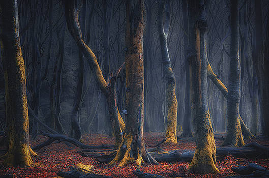 Dancers of the night by Rob Visser