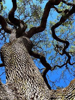 Elizabeth Hoskinson - Dancing Branches