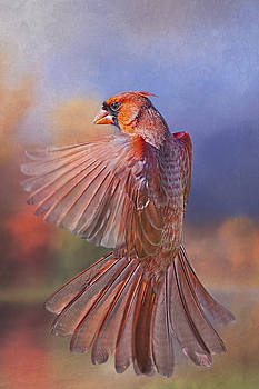 Dancing Cardinal  by Bonnie Barry