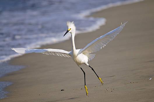 Christine Kapler - Dancing Egret