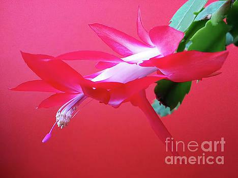 Dancing Flower by Jasna Dragun
