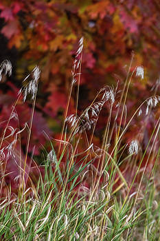 Dancing Grass  by Susan Stone